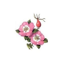 Aceite Rosa mosqueta 1º presión